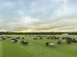 Next Year for Chantilly Polo Club